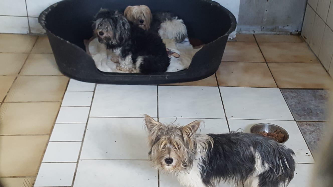 Hundefriseurin zu Besuch